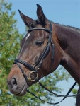 bridle-dressage pandia