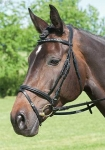 bridle-dressage silva