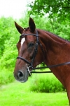 bridle-imperial plain raised9