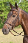 bridle-padded with flash